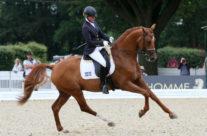 Horse for Sale – Häst till salu
