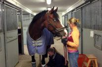 Hästskötare och/eller dressyrelev sökes